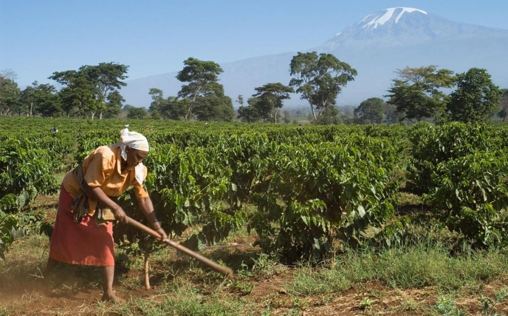 headlineImage.adapt.1460.high.coffee_tanzania_field.1439846802061.jpg